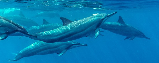 Exclusive Dolphin + Snorkelling Package for 2 Guests